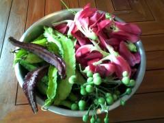 Fresh Garden garden vegetables