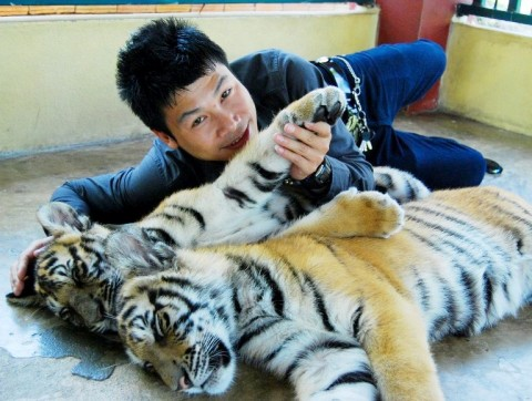 Shan Boy with Tiger
