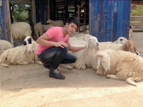 Shan boy Shepard with a flock of sheep